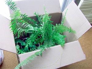 Растения не переживают тяжелой и