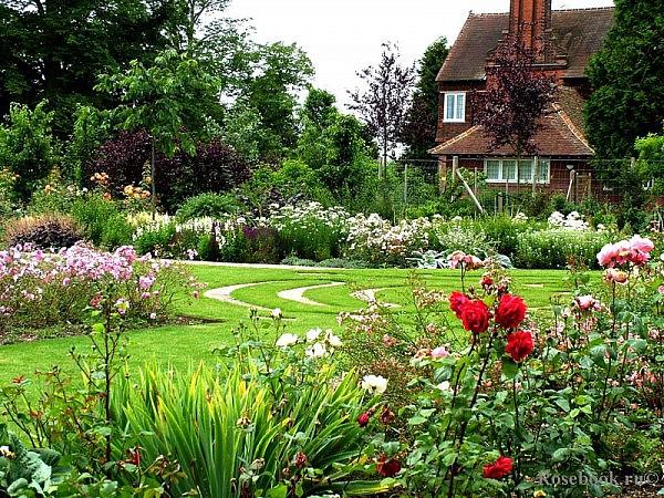Сочетание роз в саду с другими растениями
