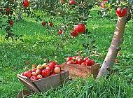 Как улучшить качество плодов с огорода?