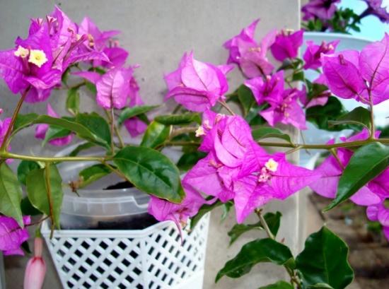 Цветок – как символ богатства