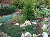 Вечнозеленые почвопокровные растения – украшение осеннего сада