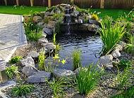 Высадка растения в искусственном пруду