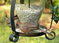 Птицы в саду – польза или вред?