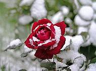 Подготовка цветочных культур к зиме