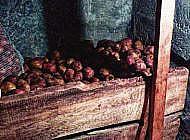 Погреб и подвал – отличия при хранении урожая