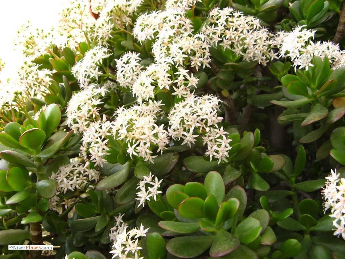 комнатное растение с длинными зелеными листьями фото