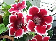 Яркий цветок для вашего дома