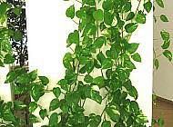 Лучше растения-очистители воздуха в доме